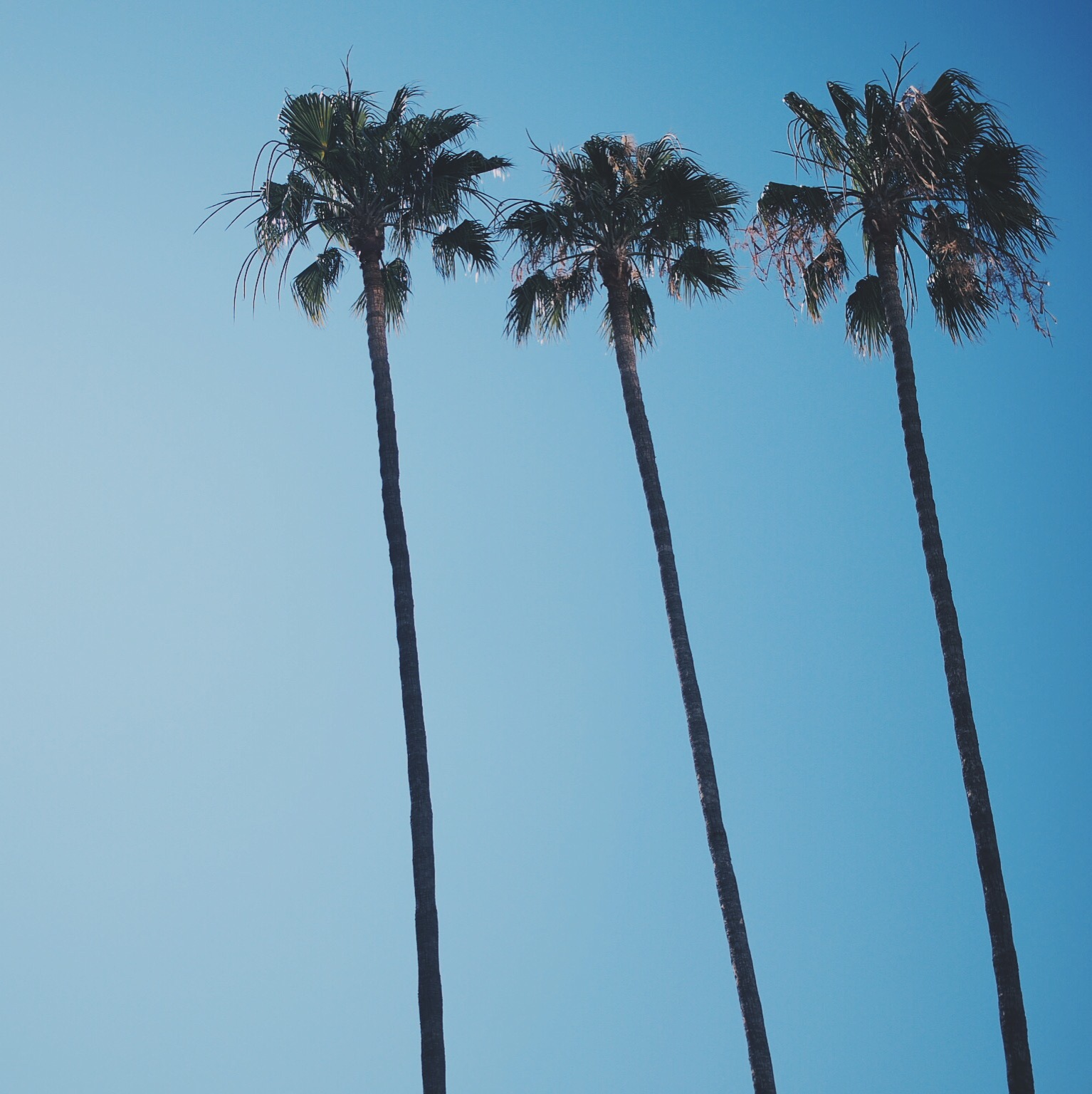 palm-trees-beverly-hills-california